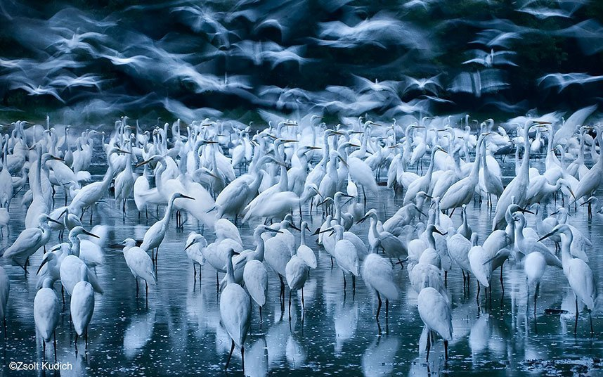 Снимки участников международного фотоконкурса Wildlife Photographer of the Year 2015