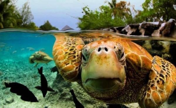 Фотографии райского острова Бора-Бора