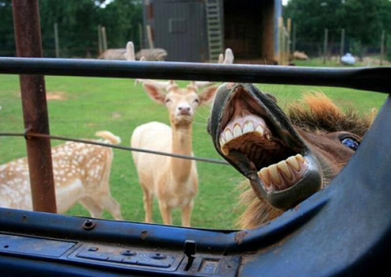 Фотобомбы от животных