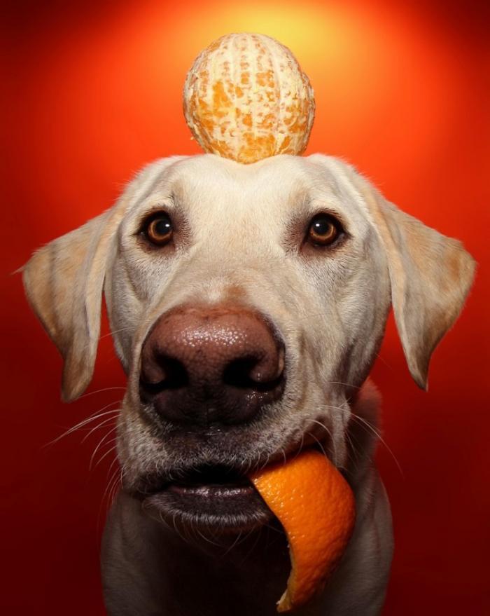 Забавная собака Уинстон и еда