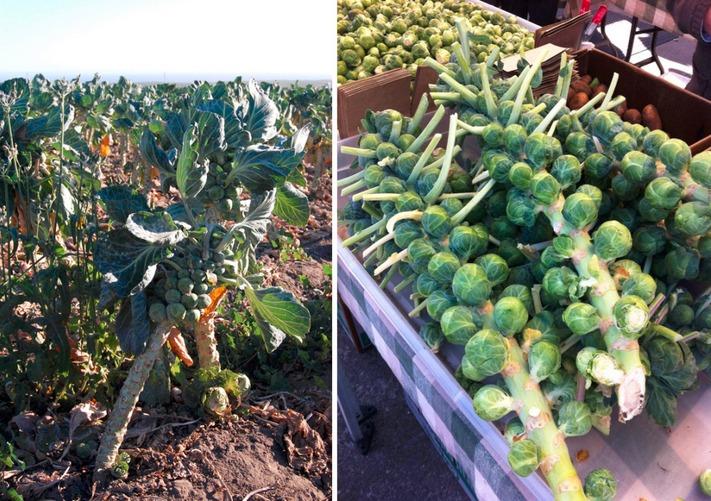 Как растут некоторые овощи и фрукты