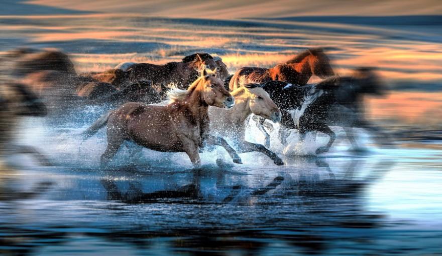 Красота и изящество лошадей на фотографиях