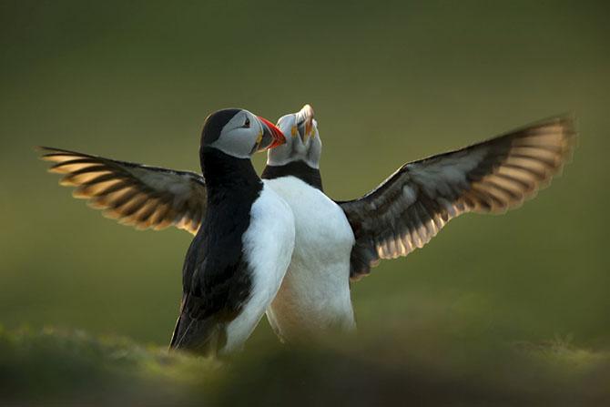 Победители британского конкурса фотографий дикой природы