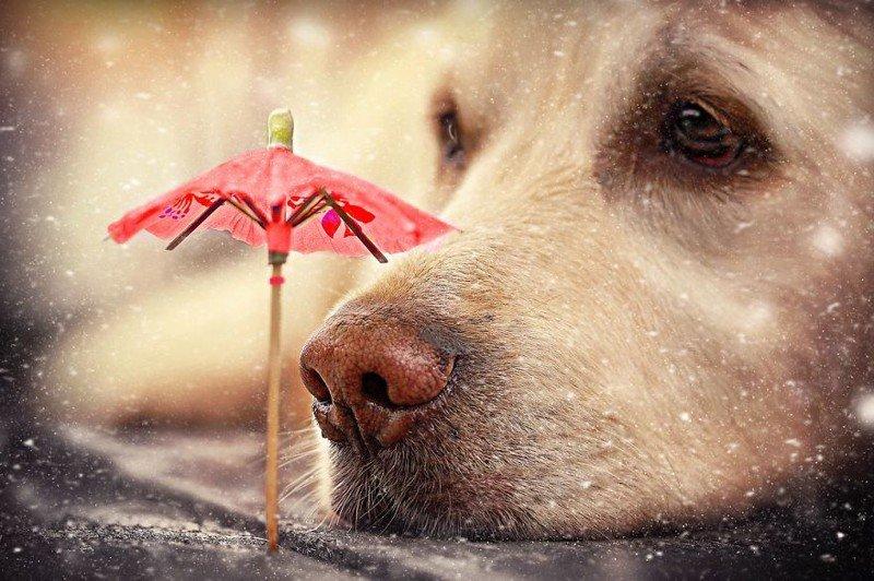 Знакомство любопытного пса с представителями фауны