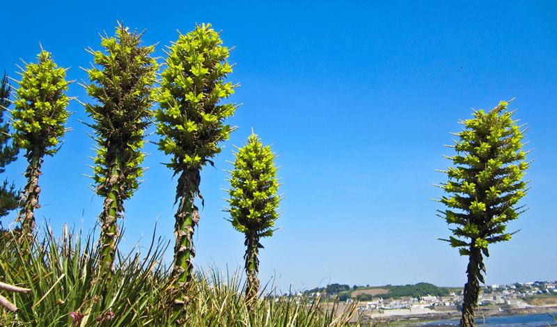 7 опасных растений-хищников со всего мира