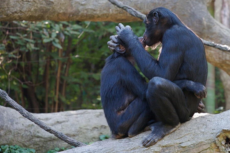 Идеальные отношения среди животных пар