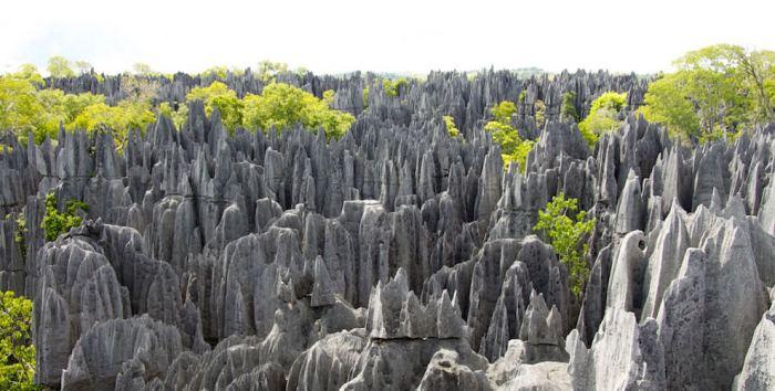 Каменный лес в национальном парке Цинги-де-Бемараха на Мадагаскаре