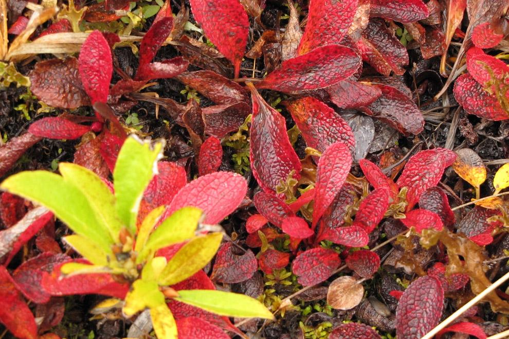 Осень в парке Денали на фотографиях