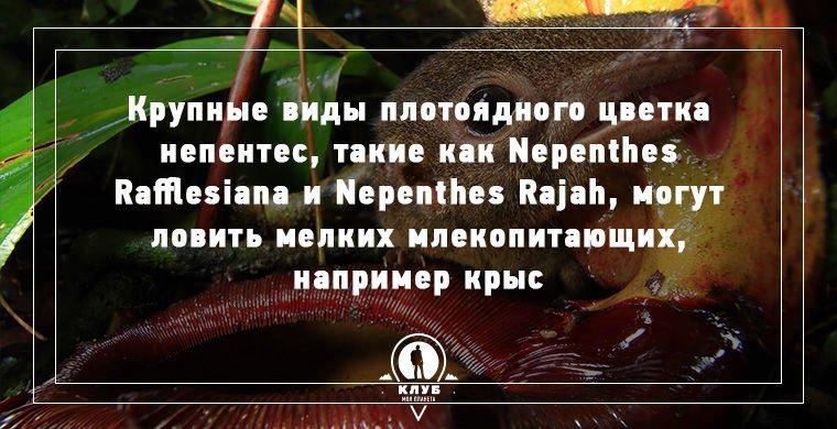 Интересные факты о плотоядных растениях