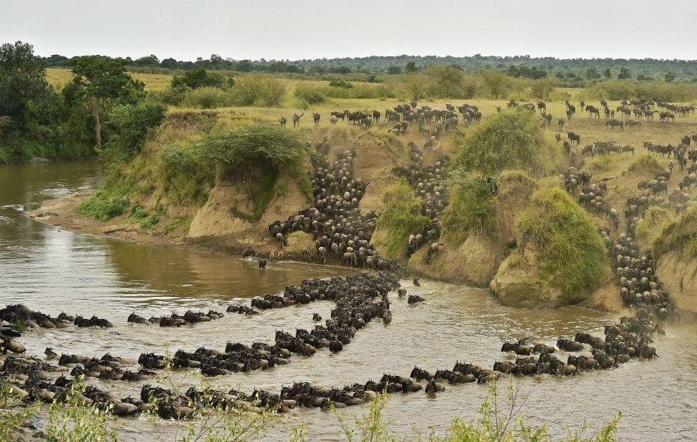 Великая миграция животных в Кении