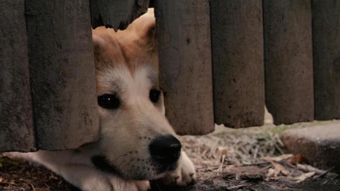 Способны ли собаки к телепатии?