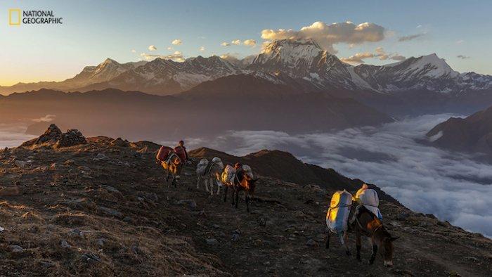Работы, присланные на фотоконкурс National Geographic Photo Contest 2015