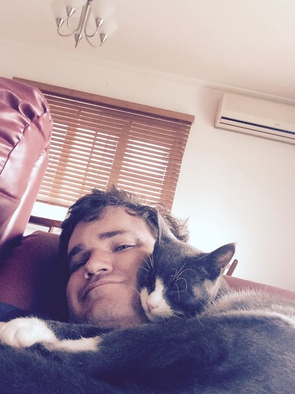 Кошки, которые игнорируют ваше личное пространство