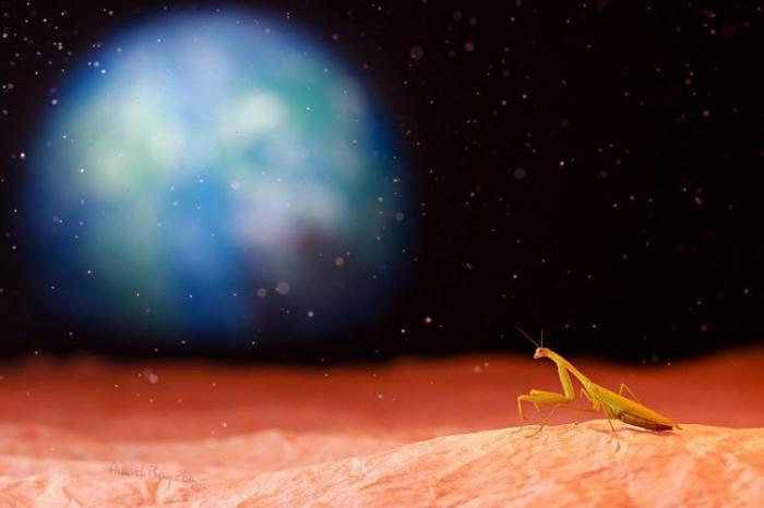 Мир насекомых на фотографиях Надава Багима