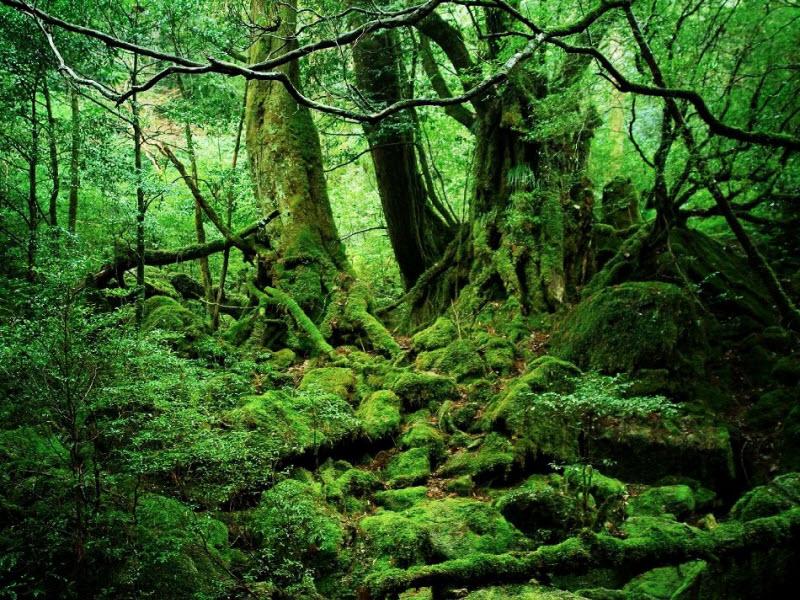 7 достопримечательностей в Японии, которые еще не популярны среди туристов