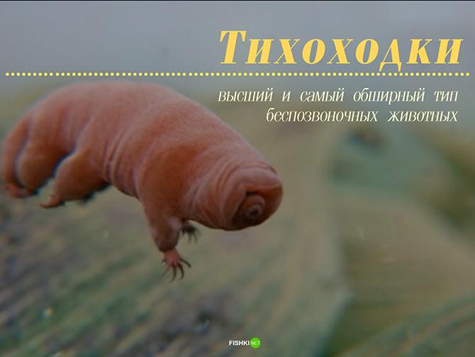 10 примеров размножения без самцов из живой природы