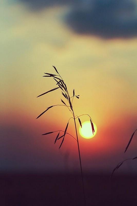 Чудесные мгновения рассветов и закатов на фотографиях