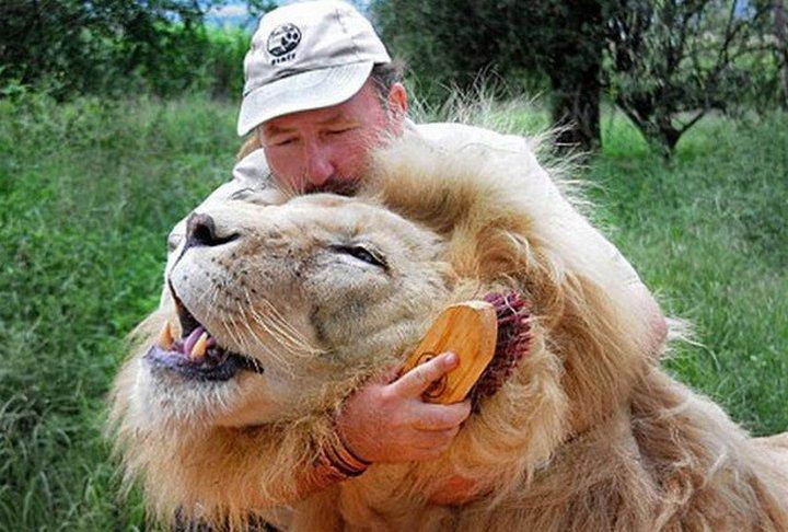 Как ветеринары лечат больших зверей