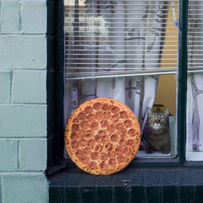 Пицца в дикой природе как современное искусство