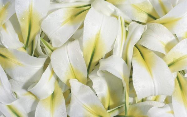 Как природные ароматы меняют наше настроение
