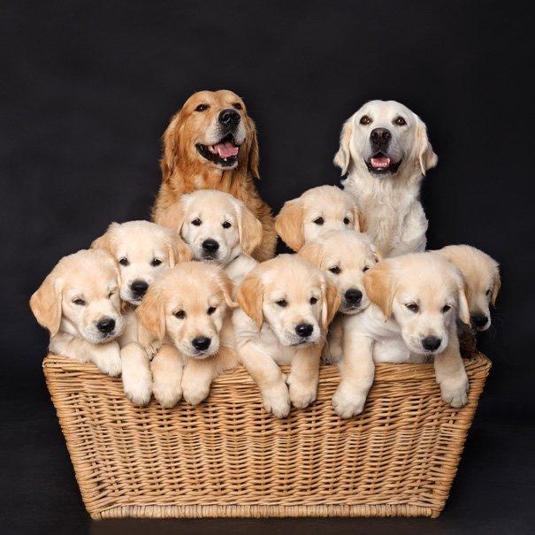 Милые мамы-собаки и их очаровательные щенята - продолжение