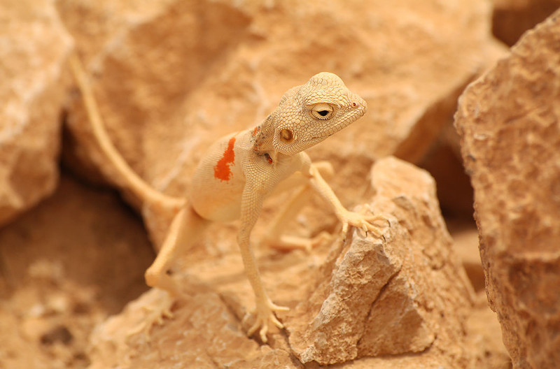 Мимикрия: искусство камуфляжа у животных