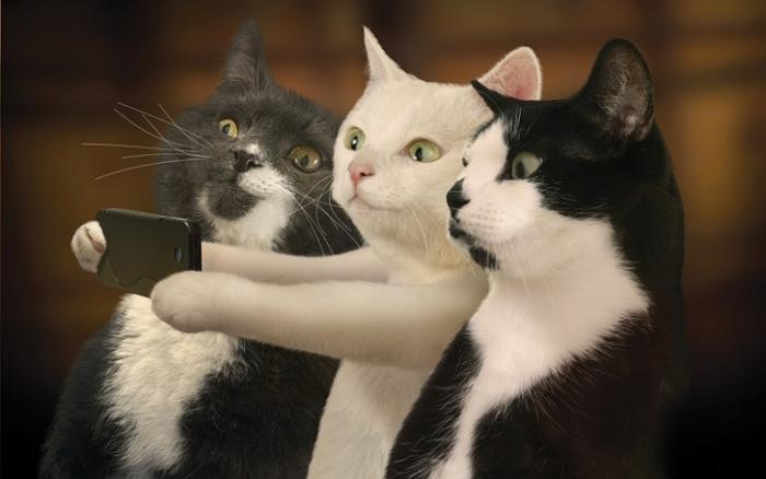 Селфи котиков для календаря