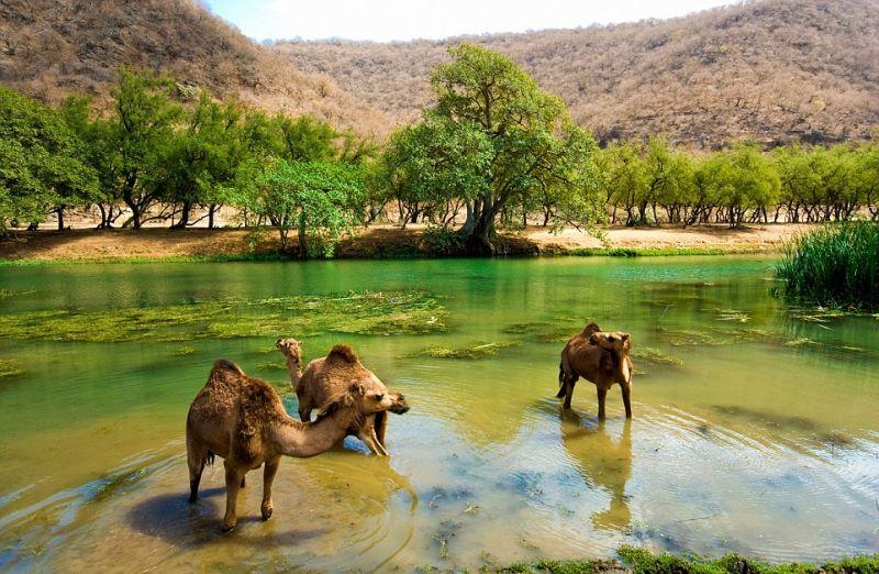 Джунгли посреди пустыни, которые расцветают на пару месяцев в году