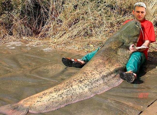Самые большие рыбы-гиганты