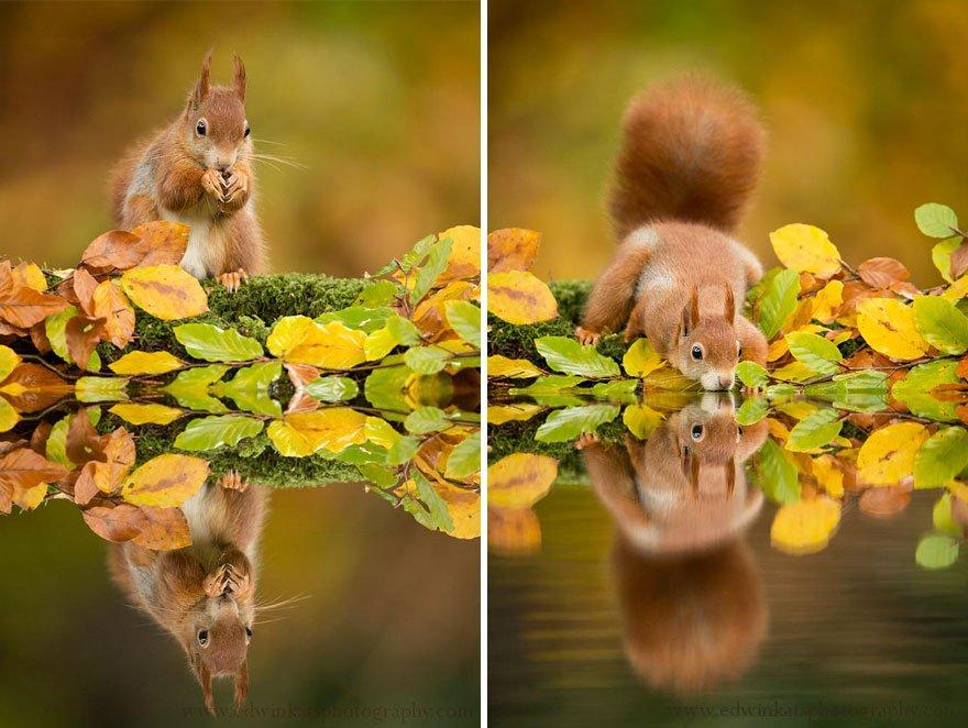Животные и золотые осенние деньки