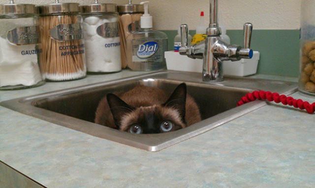 Коты, которые думают что спрятались