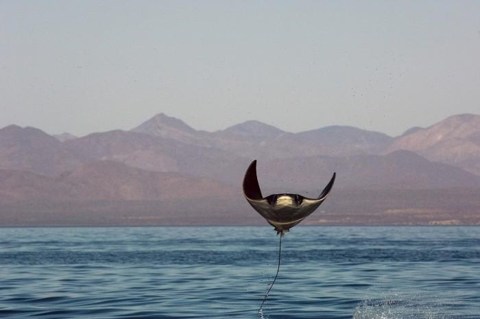 Редкие обитатели морей в объективе Брайана Скерри