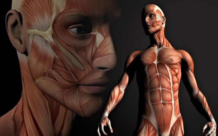 С какой скоростью обновляются клетки нашего организма