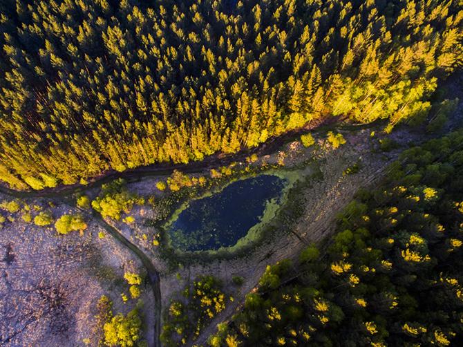 15 фотографий дикой природы России от National Geographic