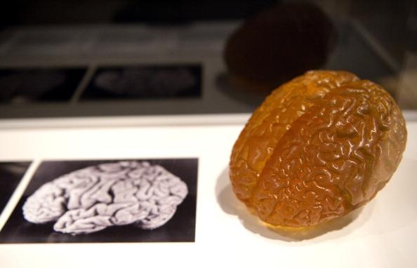 26 фактов о невероятно мощном человеческом мозге