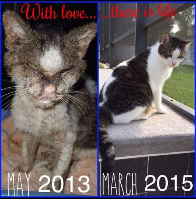 Спасенные кошки на фотографиях до и после