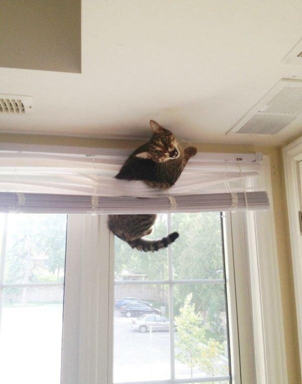Забавные кошки, которые застряли и встряли