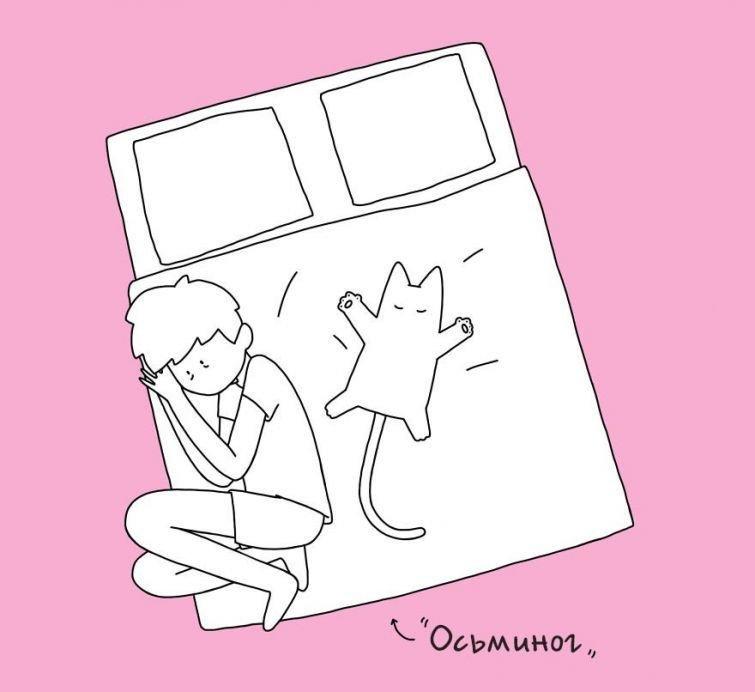 10 кошачьих поз сна, которые не дают их владельцам спокойно поспать