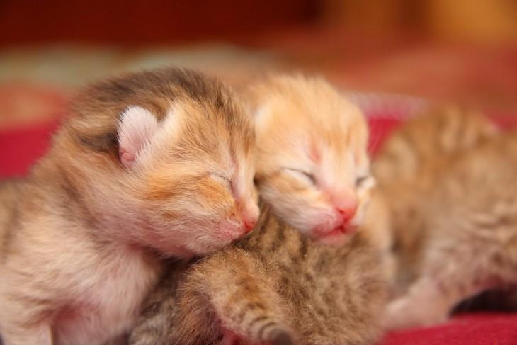7 занимательных фактов о котятах