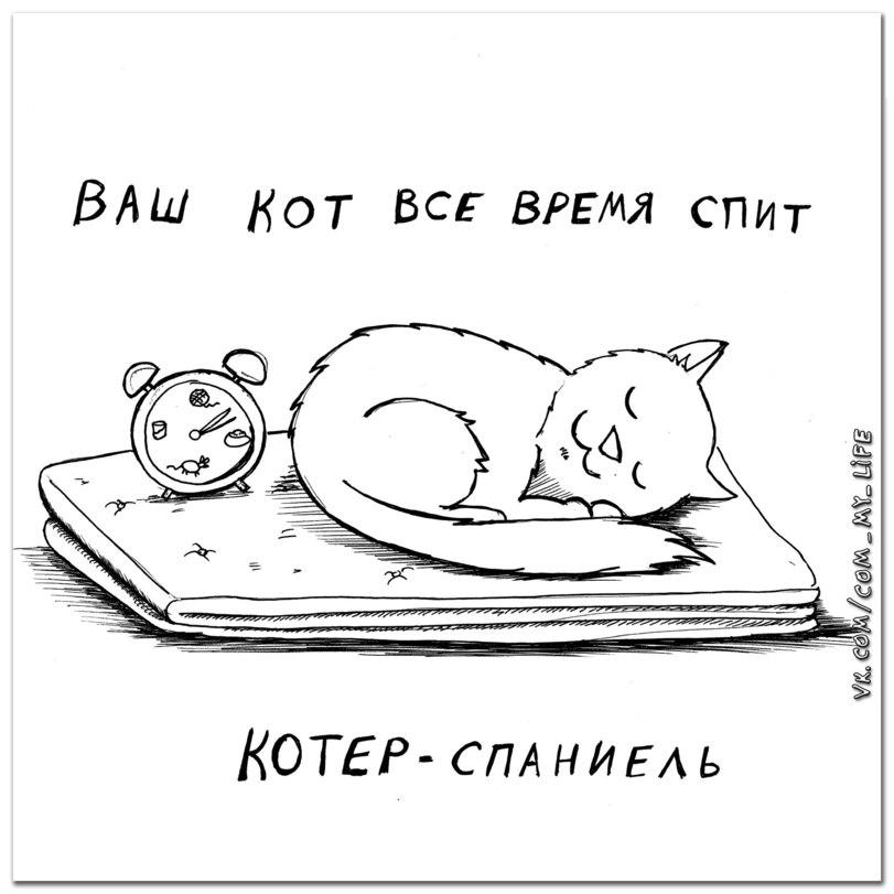 Какой же породы ваша кошка?