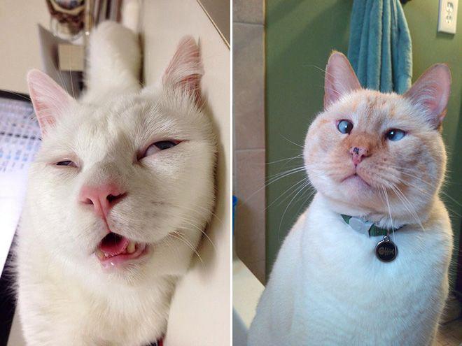 Не все коты одинаково фотогеничны