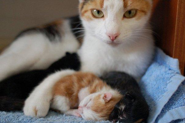 Милые мамы-кошки и их очаровательные котята