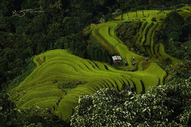 Волнующая красота Вьетнама на фотографиях Нгуена Ву Фуока