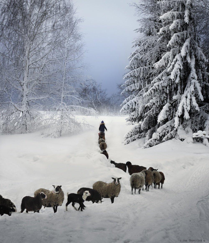Зимние снимки о счастливом детстве в деревне от Елены Шумиловой