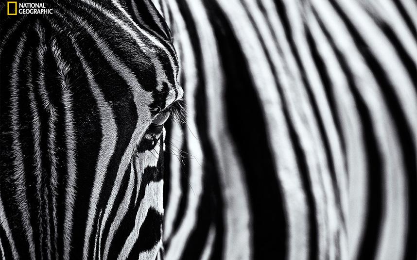 Лучшие фотографии, опубликованные журналом National Geographic в 2015 году