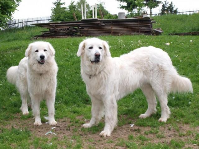 Редкие и необычные породы собак