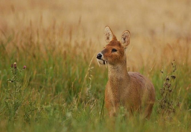 Уникальные животные, о которых мы и не слышали