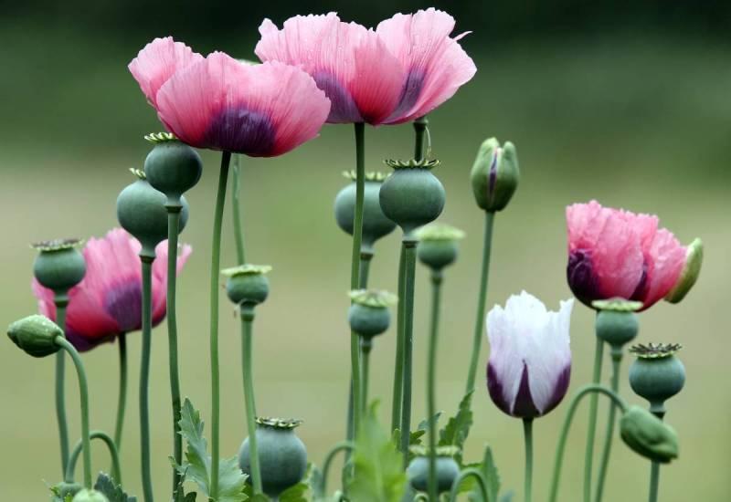 10 самых красивых, но самых опасных цветов в мире