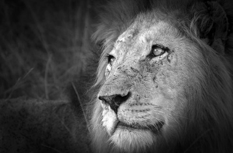 Животные на снимках лучшего фотографа Африки 2015