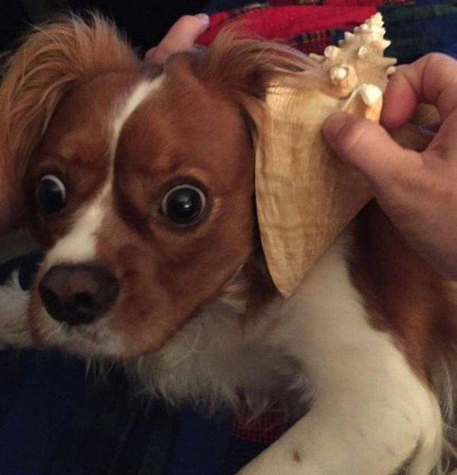 Прикольные фотографии собак за 2015 год
